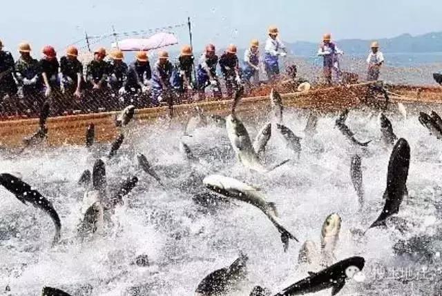 2015年上半年渔业经济形势分析